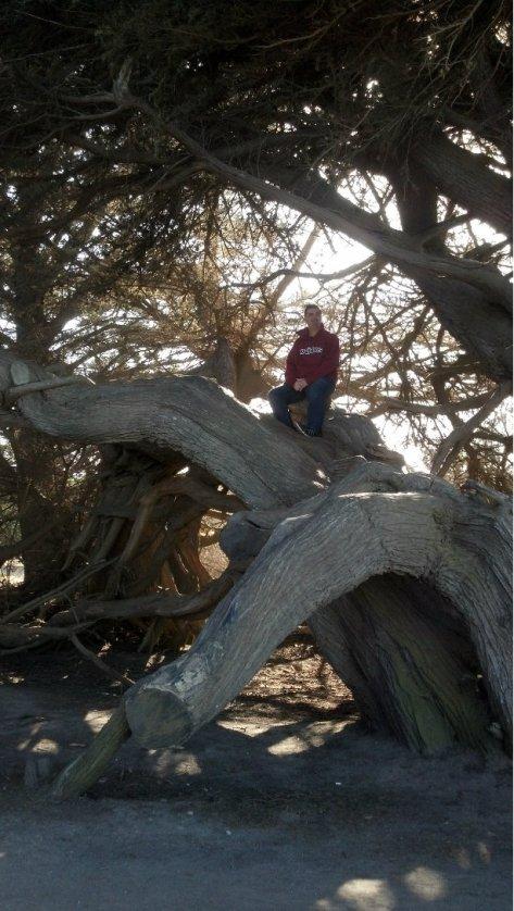 ryan tree