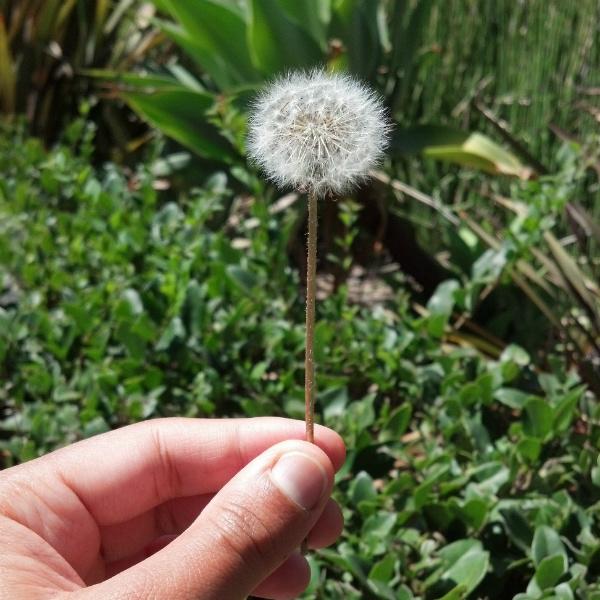 make a wish ATG FINAL