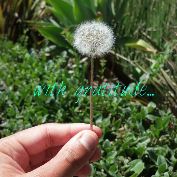 make-a-wish-atg-final_With Gratitude